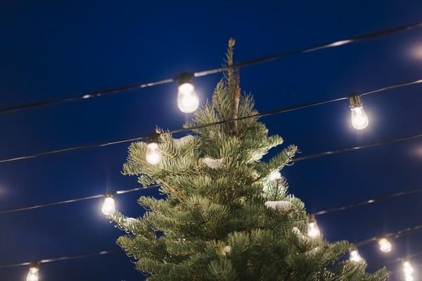 Christmas tree under Edison lights