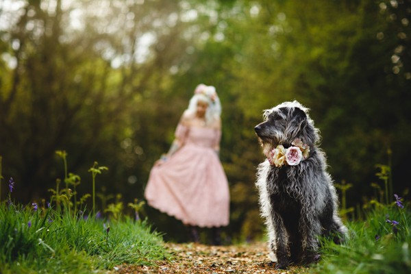 Dog with bride in background