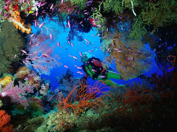 Coral Reef Scuba Diving