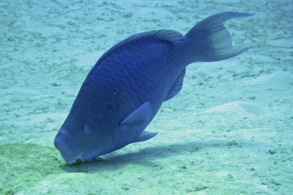 Fish in Kittiwake, Grand Cayman, Cayman Islands, Caribbean Honeymoon Destination