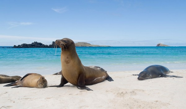 Sea Lions, Galapagos Islands