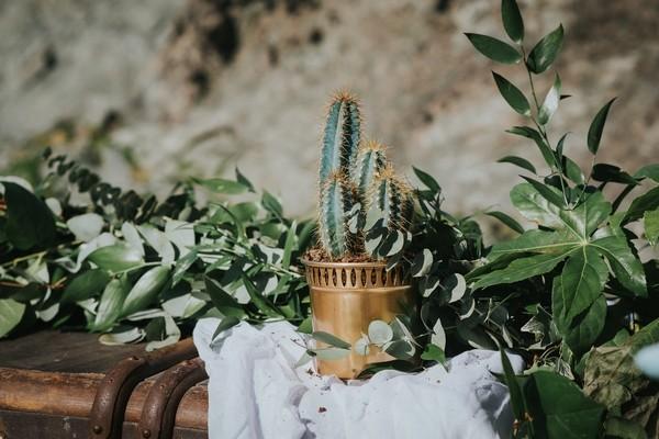 Cactus in gold pot