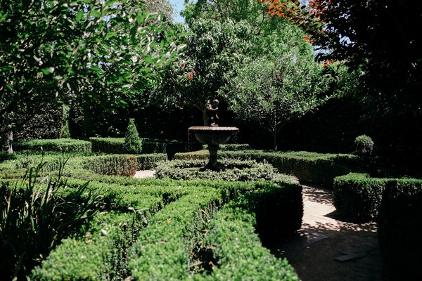 Manicured hedges at Merribee