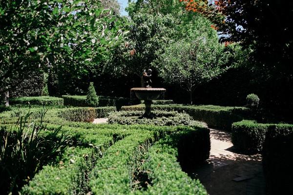 Manicured hedges at Merribee