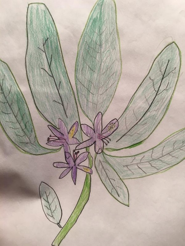 Early drawing of a flower by Anna Moores of Anna Jayne Designs