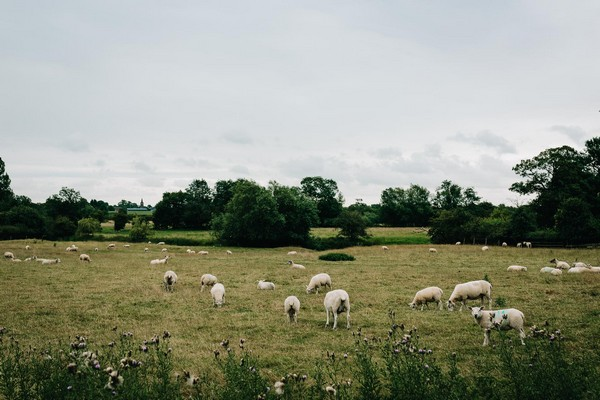 Sheep in field by Mythe Barn