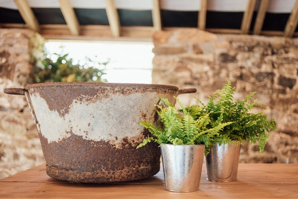Rustic urn and pot plants