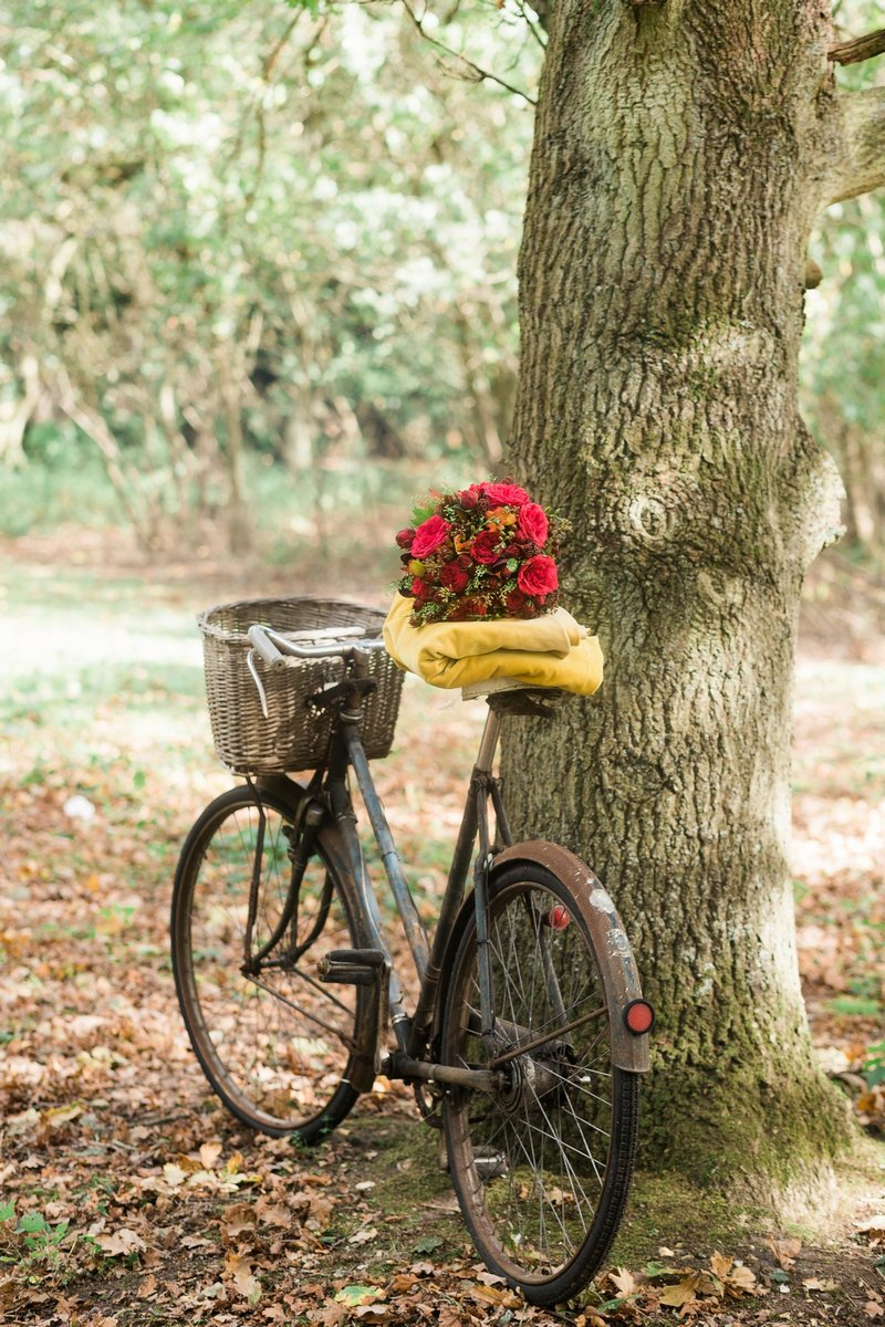 Old bicycle leaning against tree