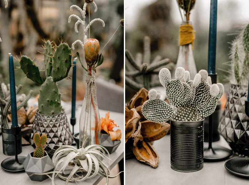 Pots and vases of cactuses on wedding table