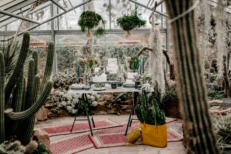 Wedding dessert table in greenhouse full of cactuses