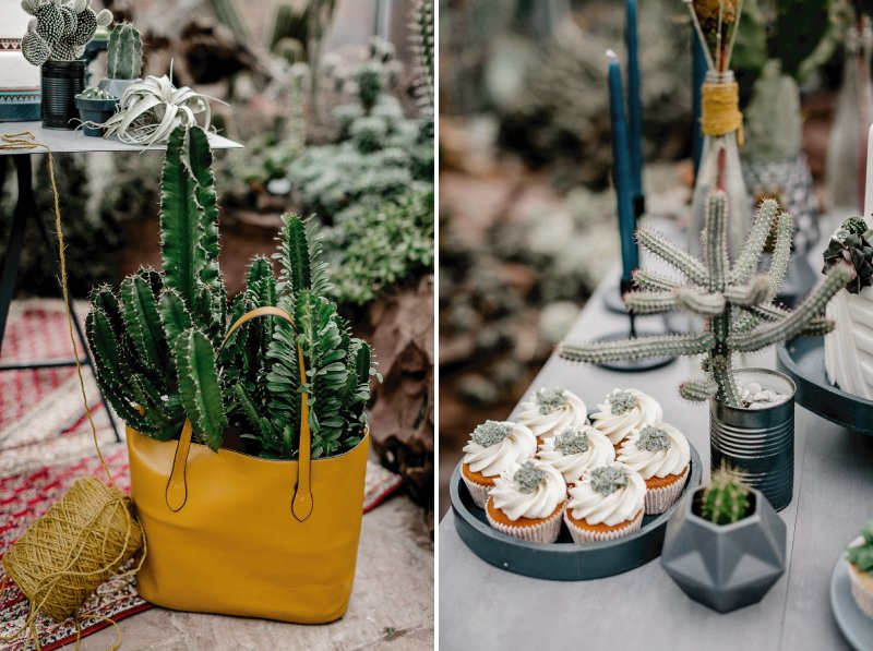 Cactus in nag and cactus cupcakes