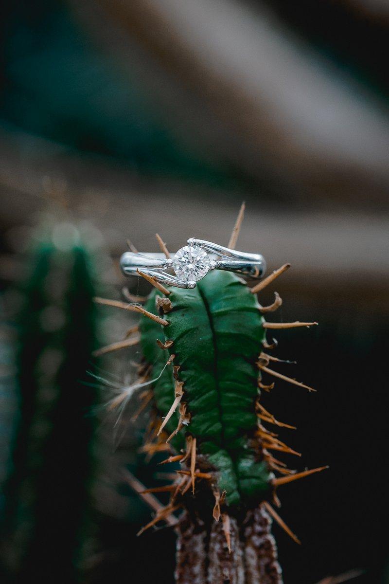 Wedding ring on cactus