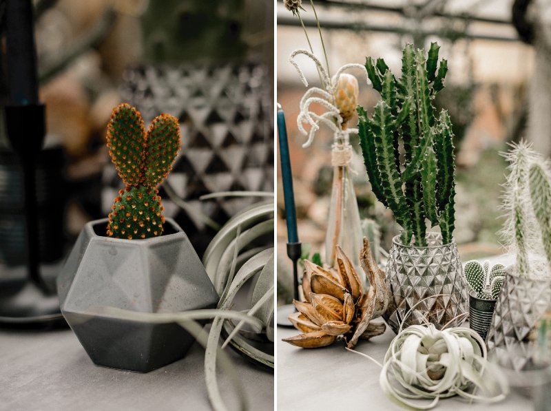 Potted cactuses on wedding table