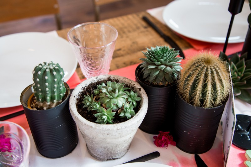 Potted cactus plants on wedding table