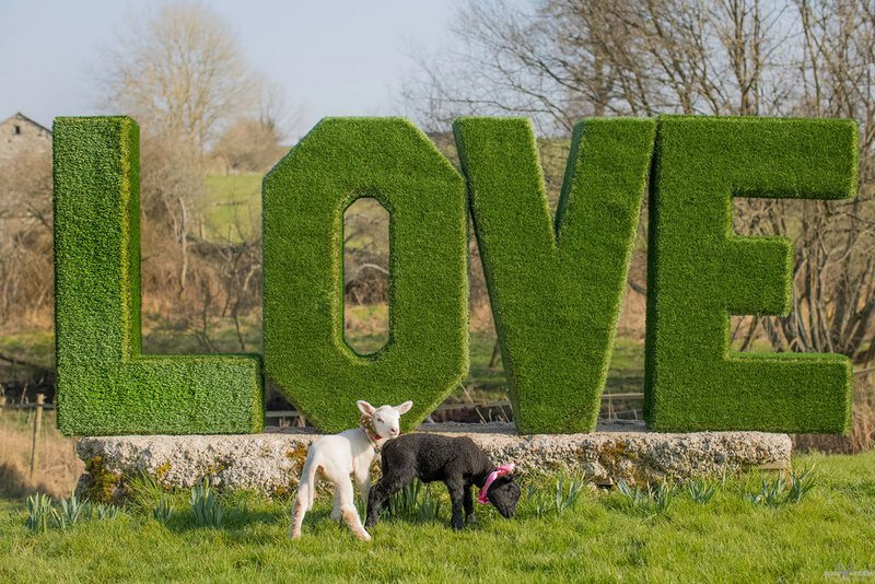 Large hedge LOVE letters