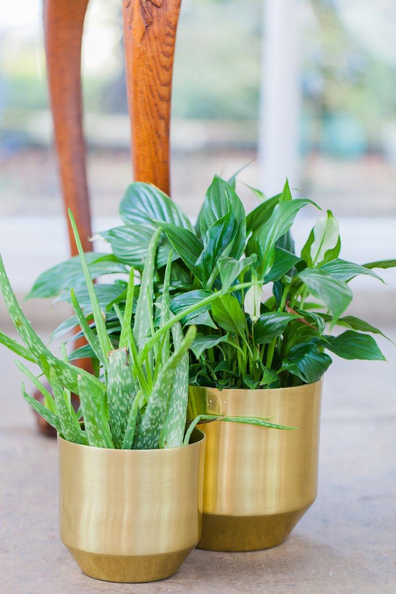 Plants in gold pots