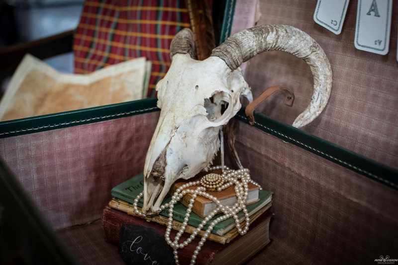 Animal skull and books in old suitcase