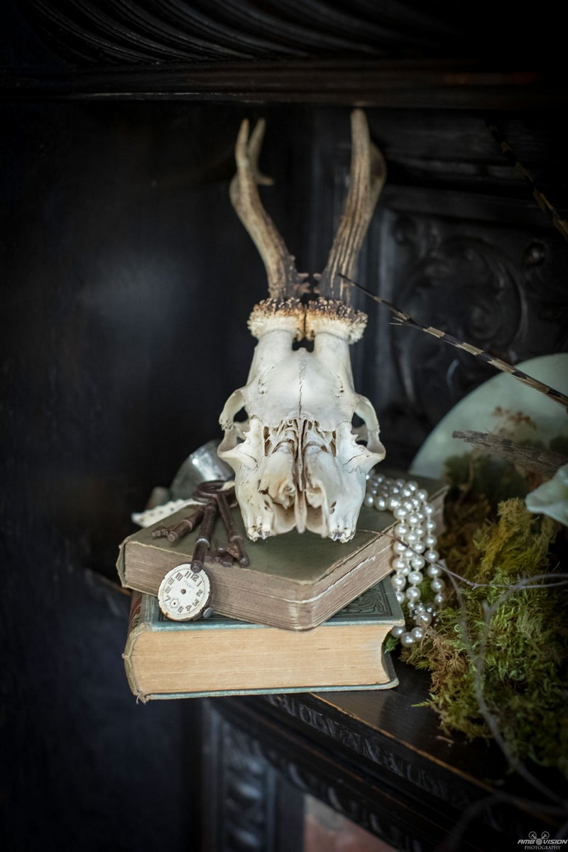 Animal skull on old books