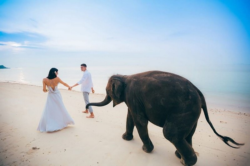 Bride and groom walking across beach in front of elephant - Picture by Dimas Frolov Photography