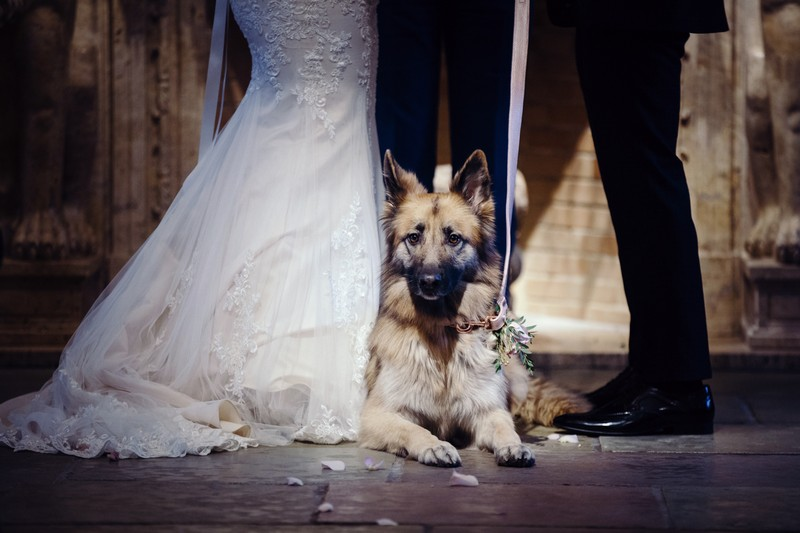 Dog laying down during wedding ceremony
