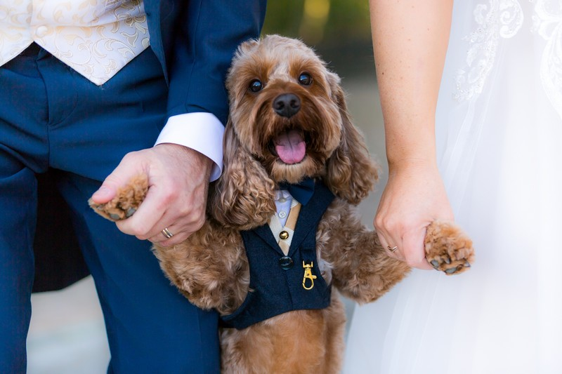 Dog in jacket and bow tie holding hands of bride and groom - Picture by SJPhotographers