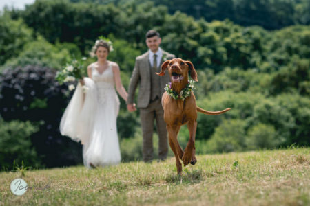 Dog running with bride and groom in background - Picture by Iconik Photography