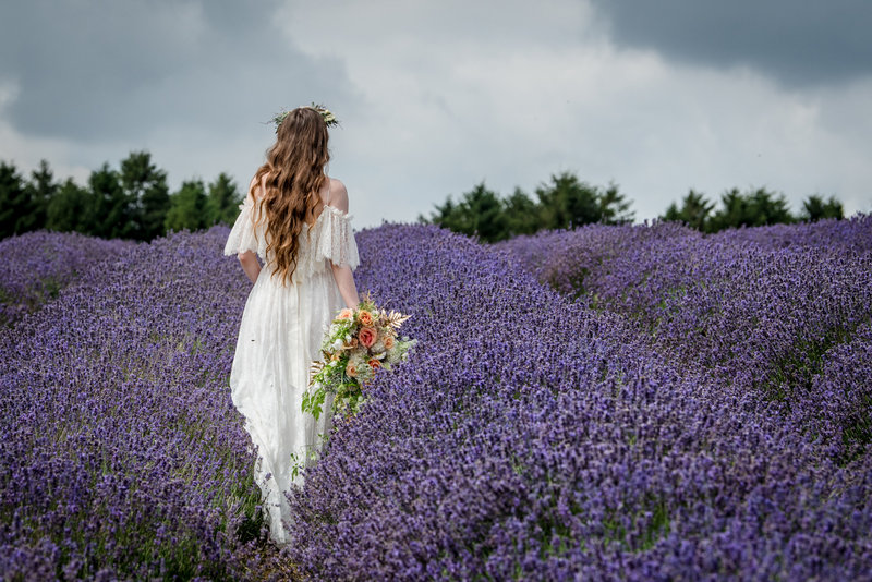Bride walking through Cotswold Lavender Field
