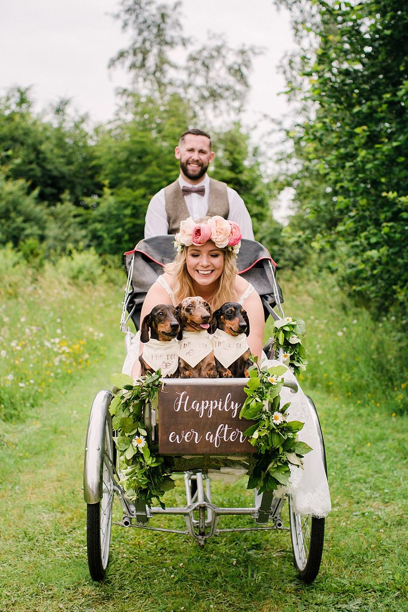Bride sitting in reverse trike with three small dogs - Picture by Vicky Plum Photography