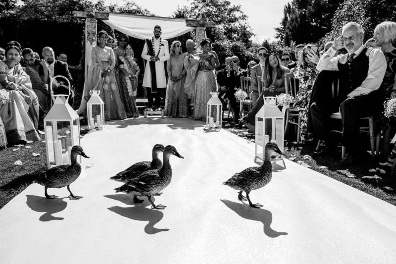 Ducks walking across asle at wedding - Picture by Aaron Storry Photography