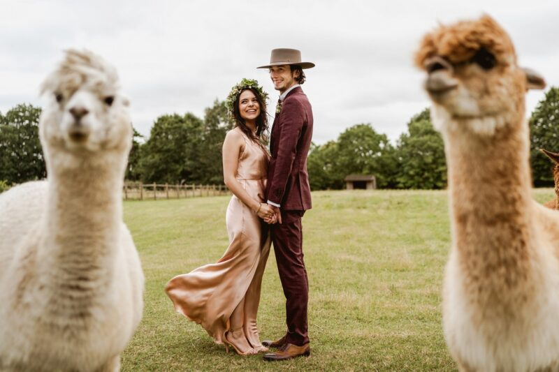 Bride and groom standing behind two alpacas - Picture by Sam & Louise